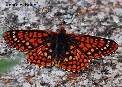 Variable Checkerspot<br />© John S. Barr